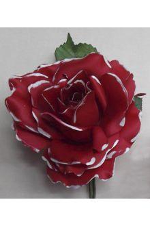 Rosa 01.324P